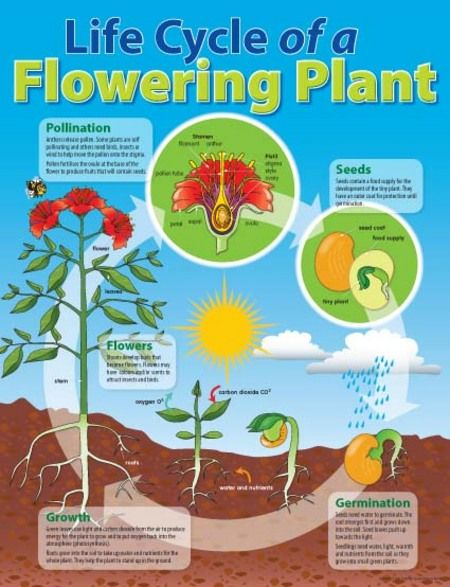 Educational Flowering Plant Charts